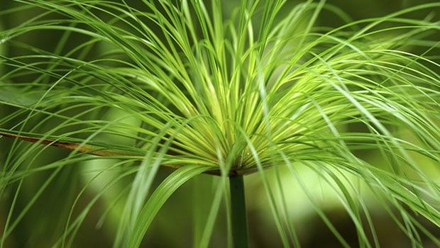 Svelata la «dieta verde» dei nostri antenati