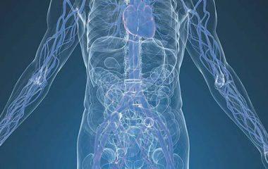 Angiologia e chirurgia vascolare